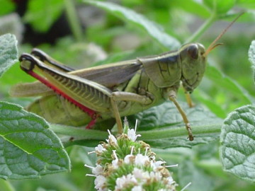 Surefire Ways to Minimize Garden Pests and Diseases